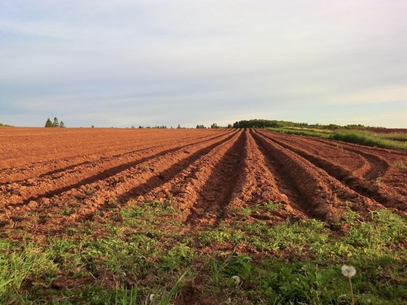 Paulo Correa questiona venda da Fazenda Prata ou Mandi